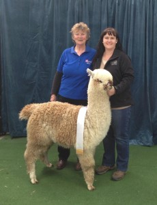 2014 Alpaca Nationals - Bendigo (Satellite)